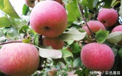 别怪|医生提个醒:吃完苹果1小时之内,切莫碰此物,别怪我没告诉你