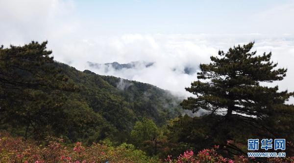湖北麻城龟峰山:半山云雾半山红