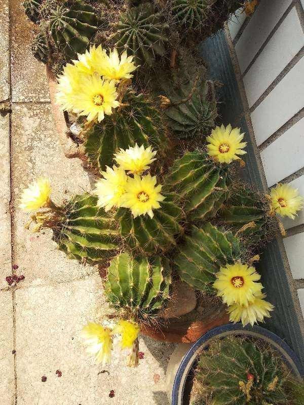 4种花不能朝叶子喷水,通风不好易烂叶,一定要注意