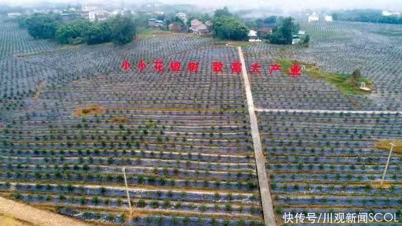 """实施""""绿化广安""""行动 广安将建花卉苗木产业园"""