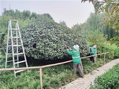 """泰安园林部门开展绿化美化 不断刷新城市""""绿色颜值"""""""