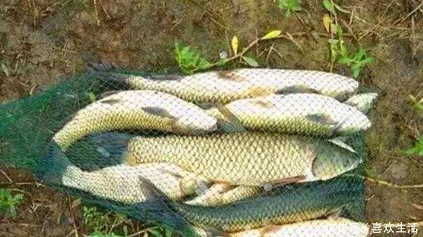 玉米 用玉米粒钓大鱼,可以试试这几种调漂方法,快速简单,中鱼率高