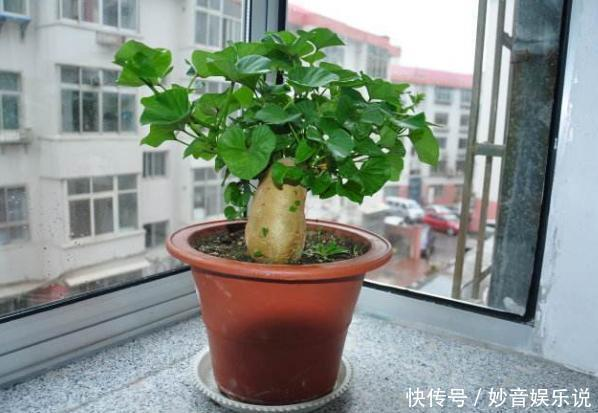 盆栽花草不能养成这3坏习惯!不然植物长不旺,花卉迟迟不开花