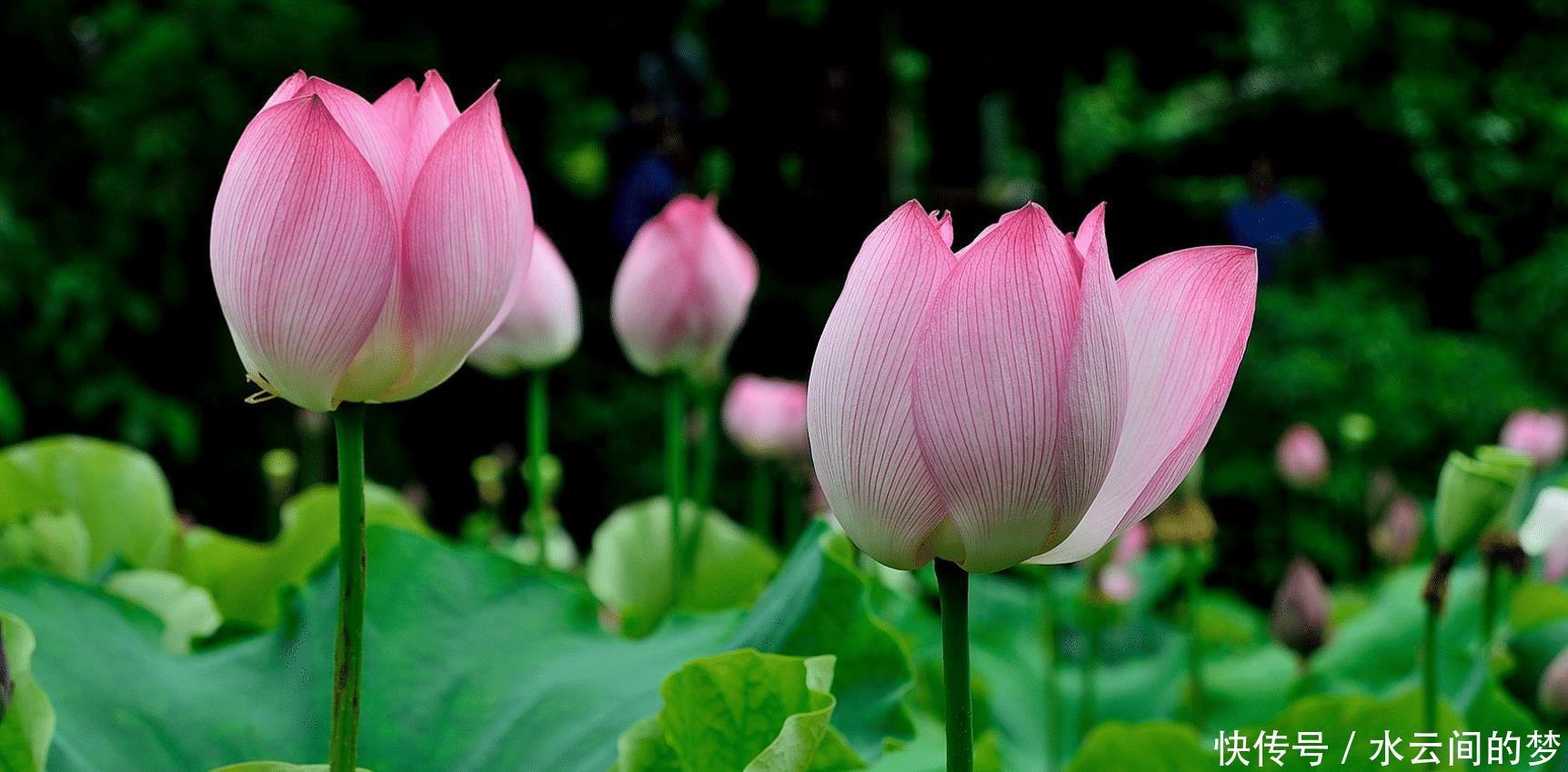 5月,百轉千回,不負前緣,心系舊愛,癡情無解,執手此生不悔!