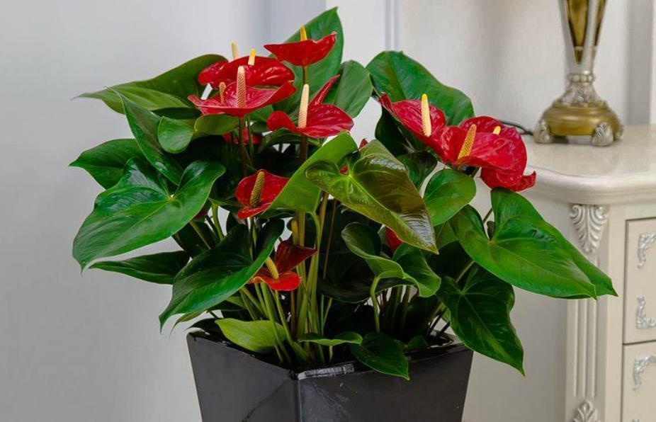 """养花高手都在养这6种花,四季开花非常美,最后3种""""香味""""足"""
