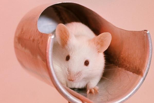 """惹不起的生肖鼠:11月22日是你最大的""""转运日"""",后半生变""""金""""鼠"""