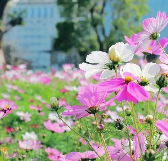 春日赏花指南来了!趁着阳光正好,这些地方不要错过