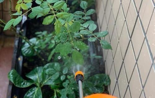 【草丁图书馆】养花扦插育苗,用它催根,存活率太高,家里都摆不下了!