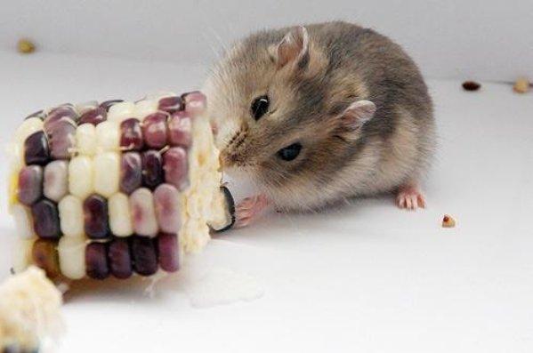 屬鼠人2021年有喜事,生肖鼠將有4大喜來臨,看看是什麼喜