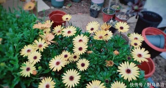 养花不会浇水,教你3个判断方法,养啥花都适用,再也不怕浇错水
