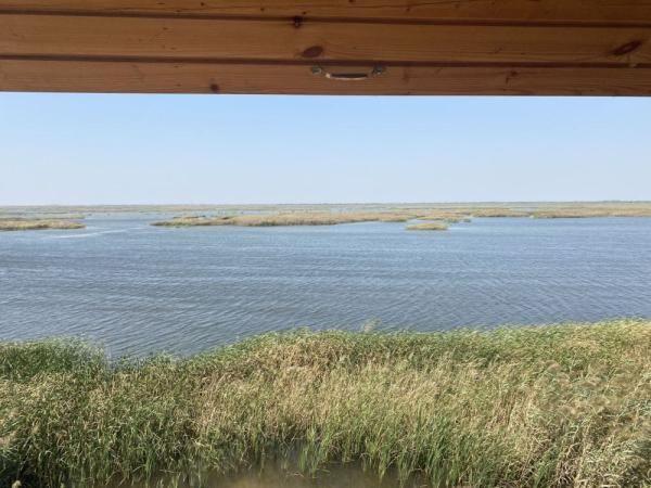 黄河三角洲自然保护区:生态好不好 鸟儿说了算