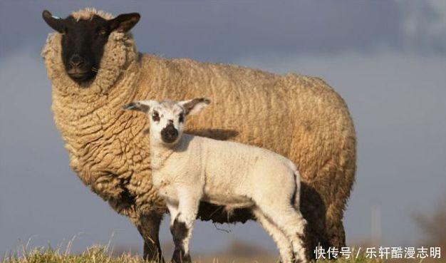 五月,生肖羊事業發展也會有很大的幫助!