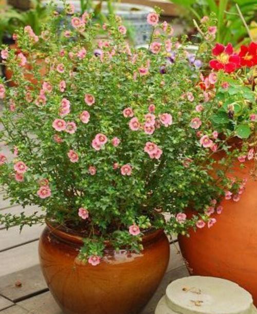 四种植物度夏难,春夏防护做得好,这个夏天轻松过