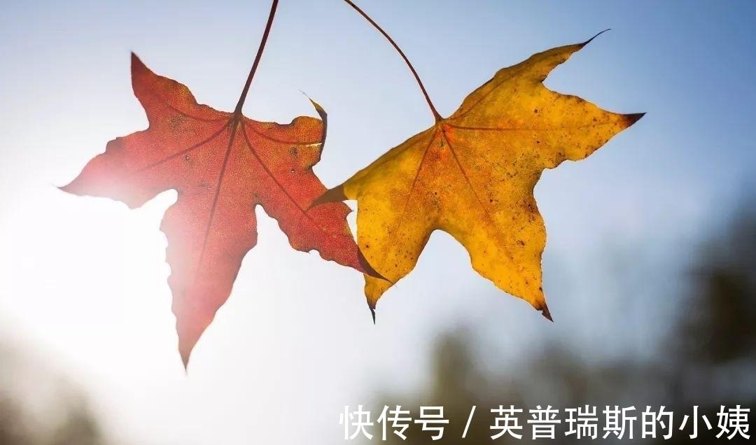 秋夜|忽有往事上心头,蓦然回首已深秋。三首意蕴深远的古诗,值得品读