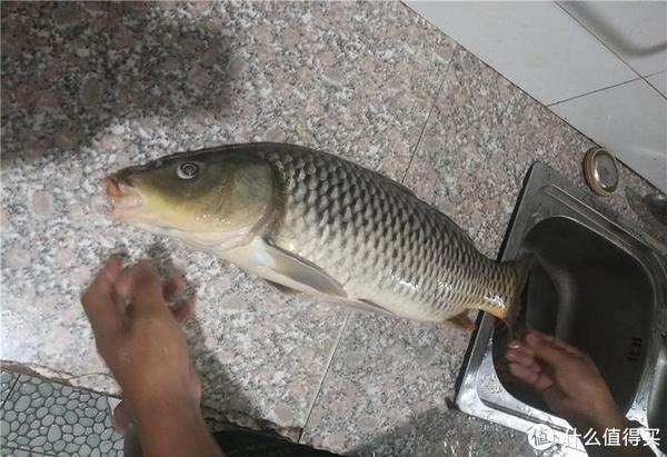 鲤鱼 这东西5块钱一大包,鲫鱼鲤鱼草鱼都爱吃,爱钓鱼的你别错过