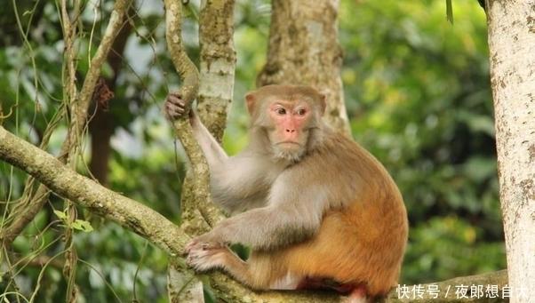 生肖猴:11月20号老天给你准备了天大的喜宴,一年一次接不接随你