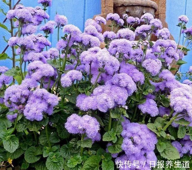 若有院子,养些紫色的花吧,高级又浪漫!