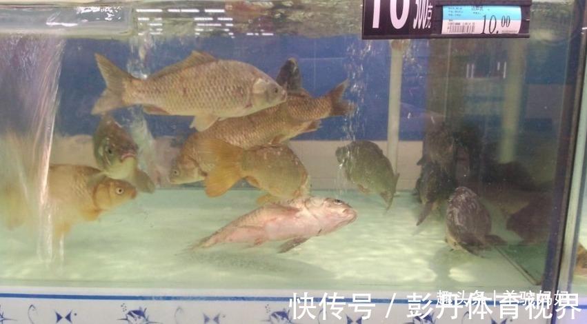 """活鱼 仅需一勺""""粉""""死鱼变活鱼?这些打药的鱼,无数父母还疯抢给娃吃"""
