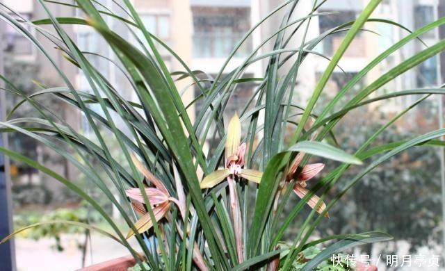 """浇水 给兰花浇水,别碰3个""""雷区"""",一个不小心,叶子全黄、不开花"""