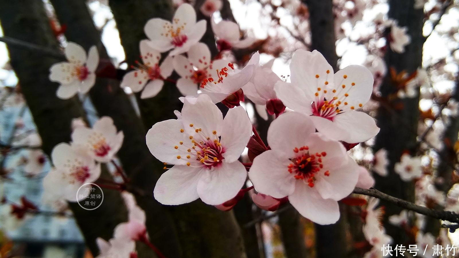 错过的春天,还有多少美好留下来