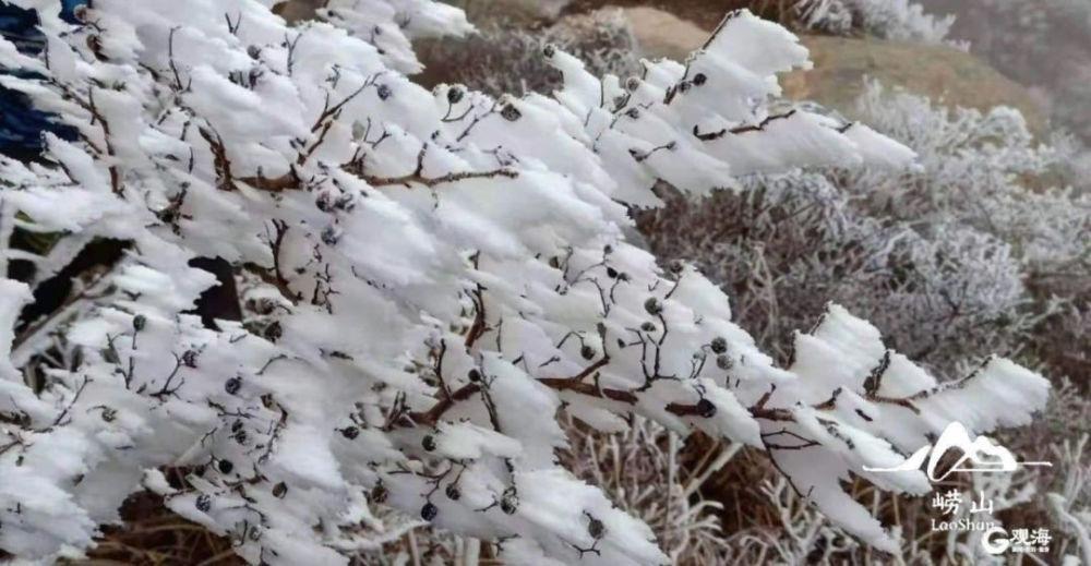 崂山|崂山下雪啦!细雨+飞雪+仙雾,这也太美了!