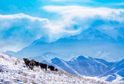 【图说新疆】新疆玛纳斯:蓝天映白雪 云雾绕雪山