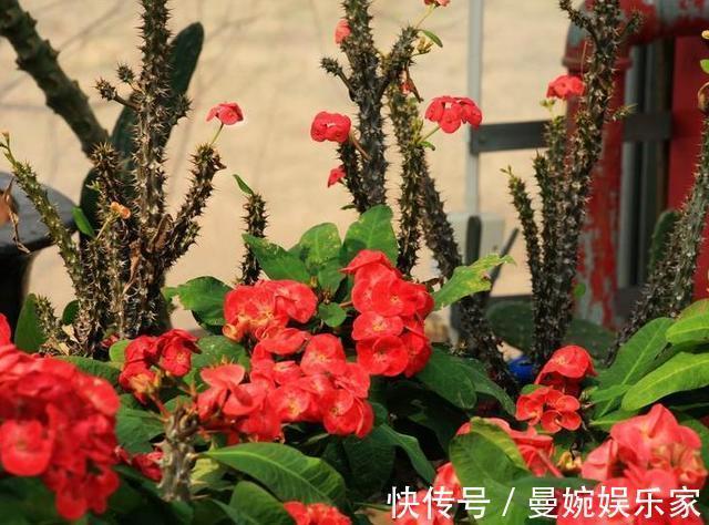 客厅 客厅不能养这三种花,一点好处没有,养了的抓紧挪走!
