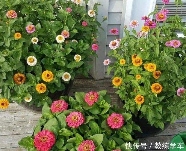 几种好看不起眼的小花,现在种刚好,一个夏天都开花!