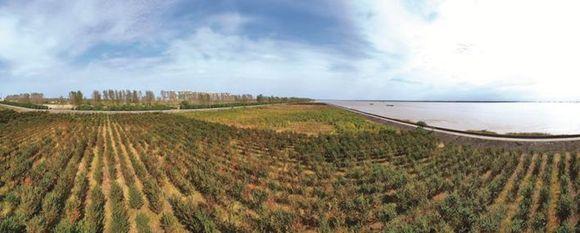 南通完成长江北岸防护林造林绿化面积上万亩
