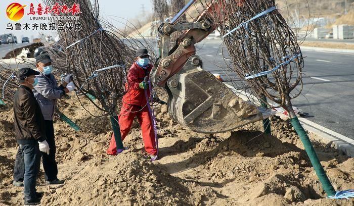 乌鲁木齐河马泉新区秋季绿化启动 首批将种植14个品种1.5万株乔木