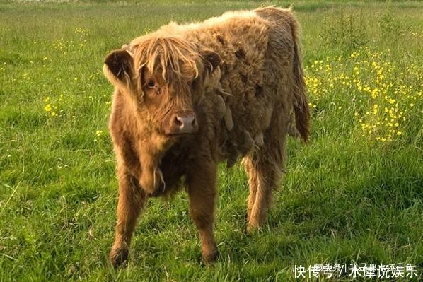 生肖牛请珍惜2个人,一个与你长长久久,一个助你飞黄腾达!