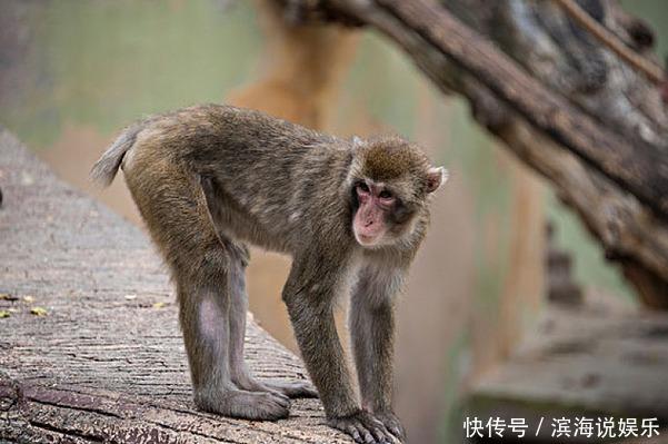 生肖猴请珍惜2个人,一个与你百年好合,一个助你平步青云!