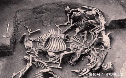 猪肉|猪肉到清朝时期才开始普及,在此之前人们都吃什么肉呢!