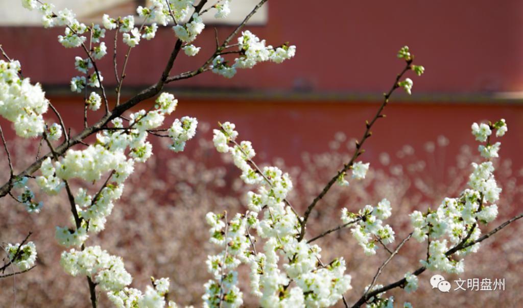 花海里的盘州村庄,你肯定没去过,太美了!