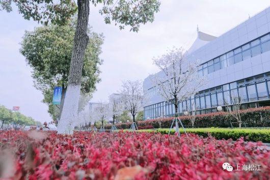 松江新增一条市级绿化特色道路!快来预约一份春天的樱花雨