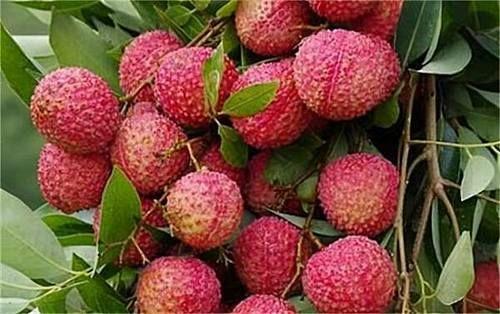 春季來了,多吃以下3種食物,排毒護膚,還能延緩身體衰老