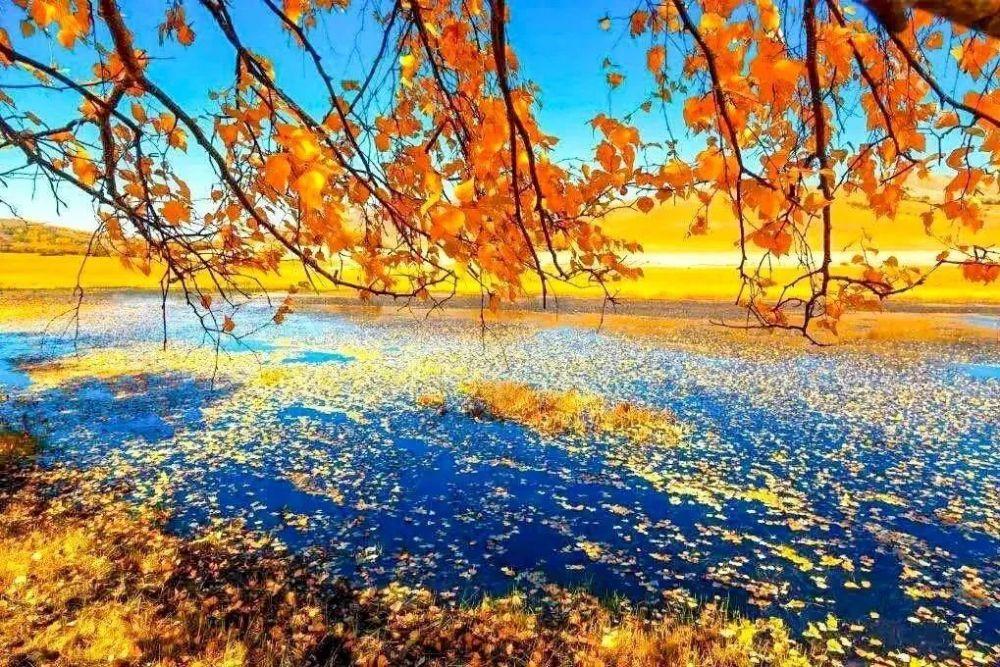"""秋色正浓,来锡林郭勒草原,给你点""""颜色""""看看!"""