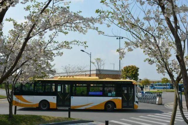 人間最美四月天!坐上度假區短駁公交,一起去賞花吧