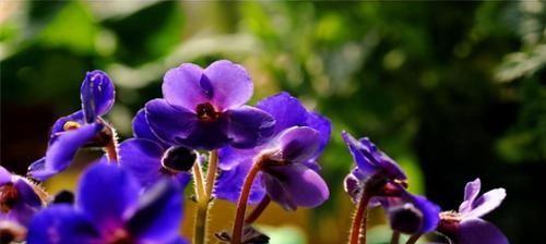 紫罗兰|女人想要变漂亮,就多吃3种食物,美容养颜,滋补肝肾,美白护肤