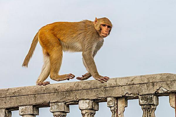 属猴人:你要大喜临头,未来6天躲不过的喜,看看什么喜?