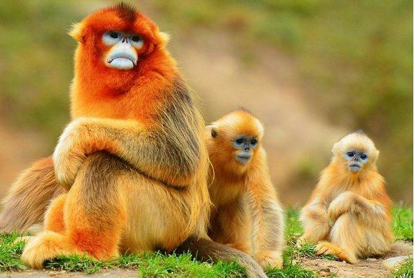 生肖猴:隻有下面這個人,才是真正陪伴你一輩子的人!