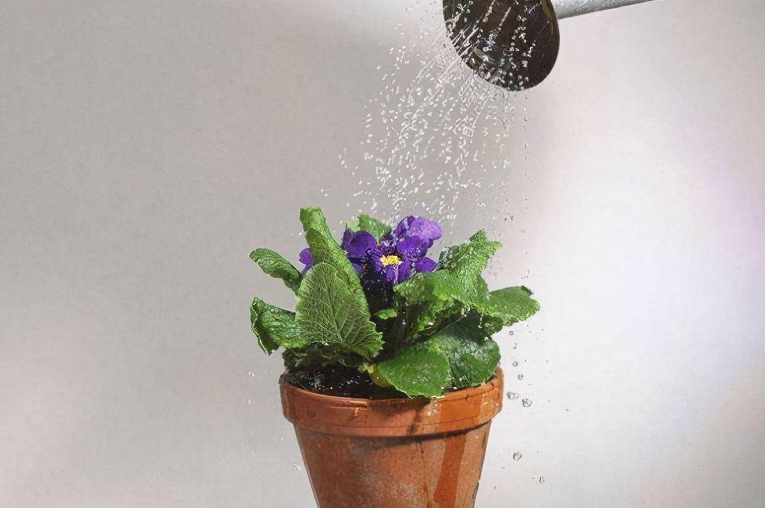 """浇花必懂知识:""""见干见湿""""和""""干透浇透""""有什么区别"""