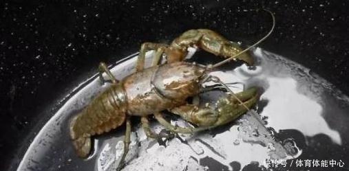 """8张让人产生""""错觉""""的照片,图7的小龙虾只是在锅里!"""