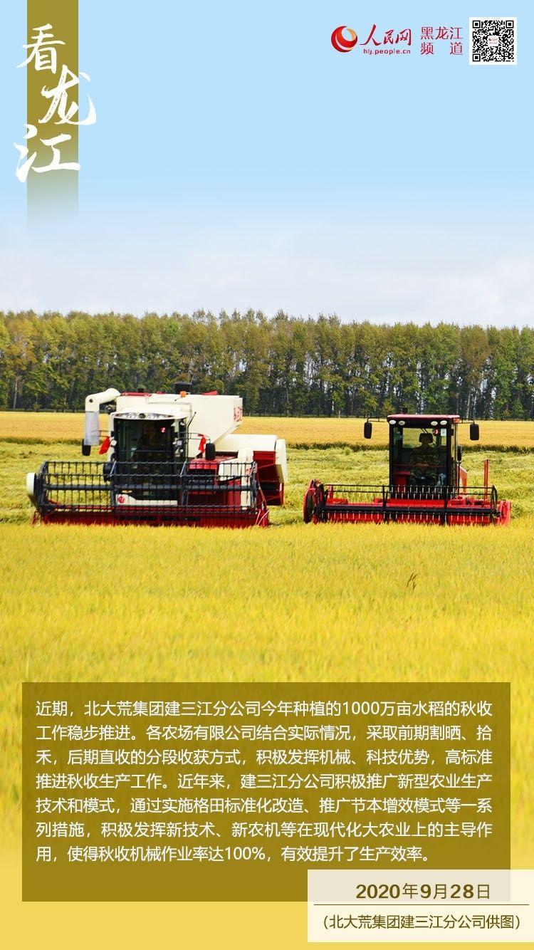 【看龙江】建三江1000万亩水稻推进高标准割晒作业
