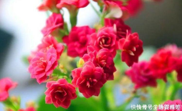 有钱人都养4种花,花大色艳,花香易打理,养在客厅美极了