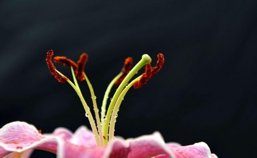 越久|下个月内,缘分与桃花相处越久,余生依然最爱你的3大生肖!