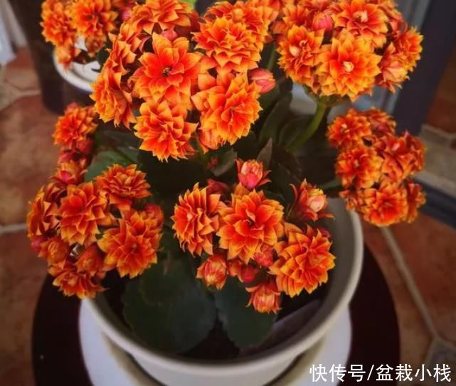 """?年底养花,建议安排8种""""便宜花"""",实惠、好养"""