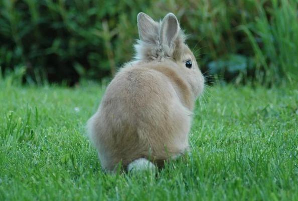 """生肖兔:以下3个年份出生的""""兔兔兔""""天生上等命,看看你家有吗"""