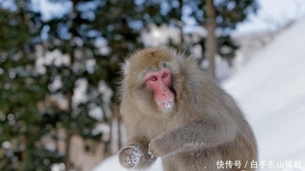 生肖猴:一定要重視2個人,一個讓你事業有成,一個陪你白頭到老