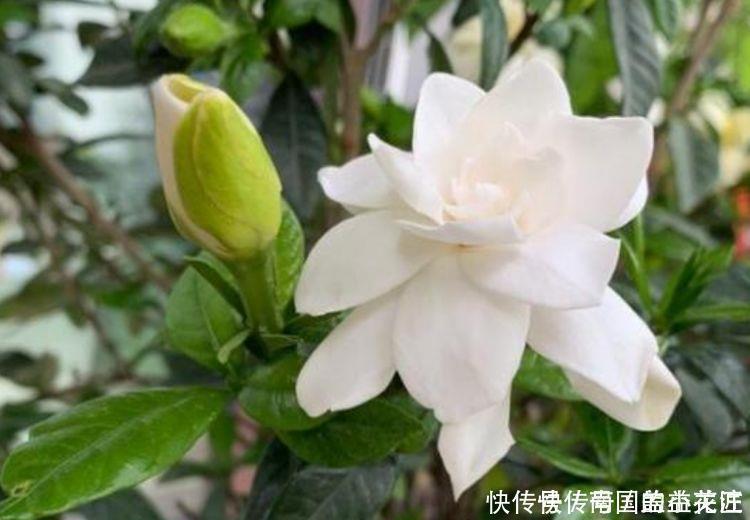 夏天最火的4种花,好养又漂亮,花姿妖娆,四季繁花似锦,美